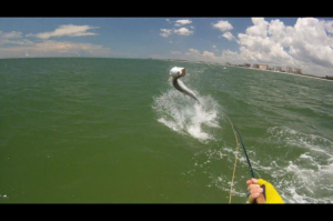 Photo Courtesy of Mike Rathgen Leaping Tarpon